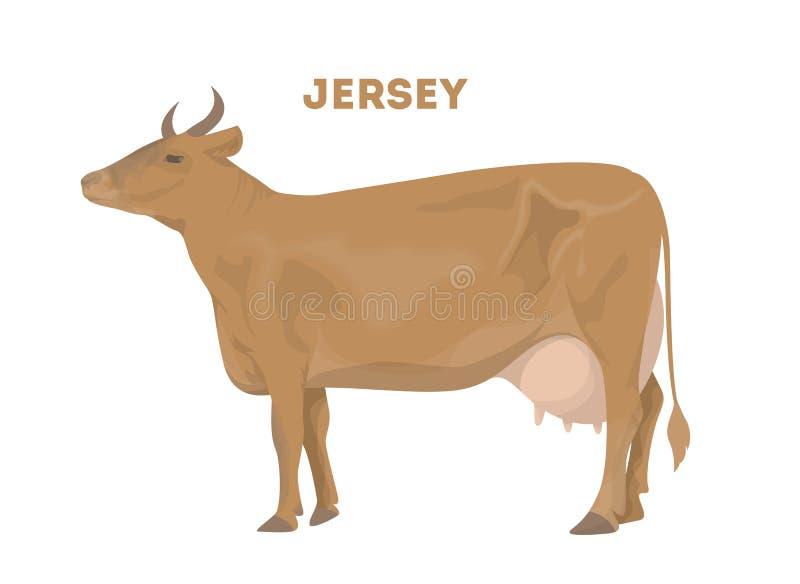 Mucca isolata del jersey illustrazione di stock
