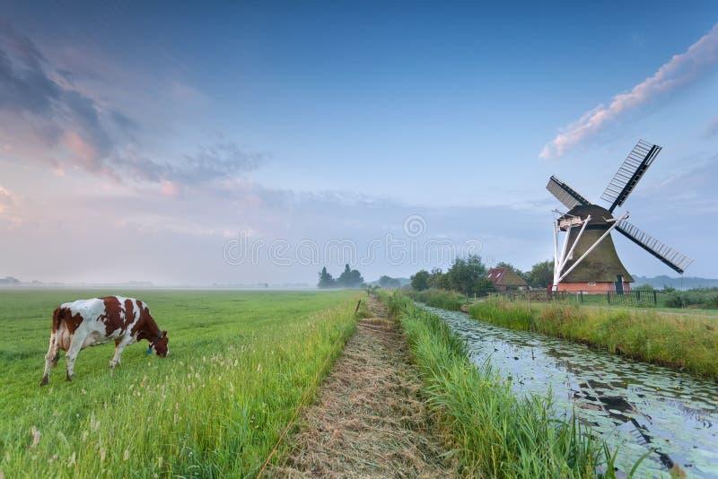 Mucca sul pascolo e mulino a vento dal fiume fotografie stock libere da diritti