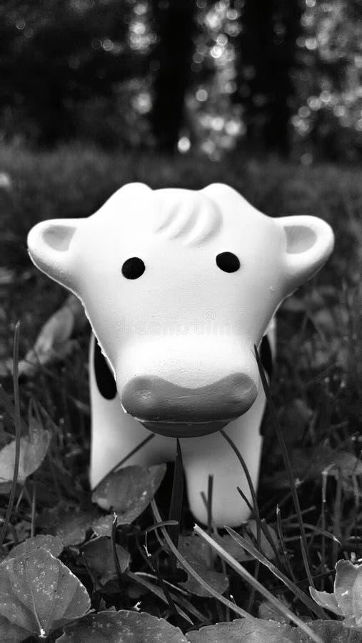 Mucca sveglia nel campo fotografia stock libera da diritti
