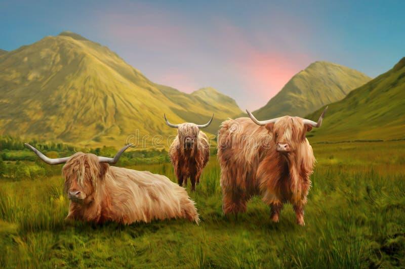 Mucche dell'altopiano immagine stock libera da diritti