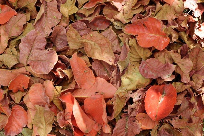 Mucchi dei rifiuti delle foglie rosse cadute backgrounds immagini stock
