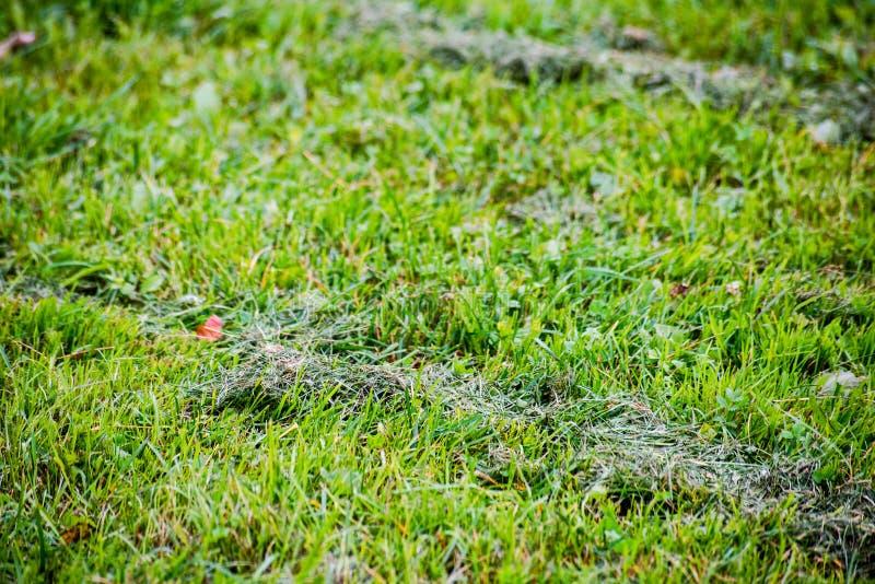 Mucchi di erba falciata in non tagliato fotografie stock