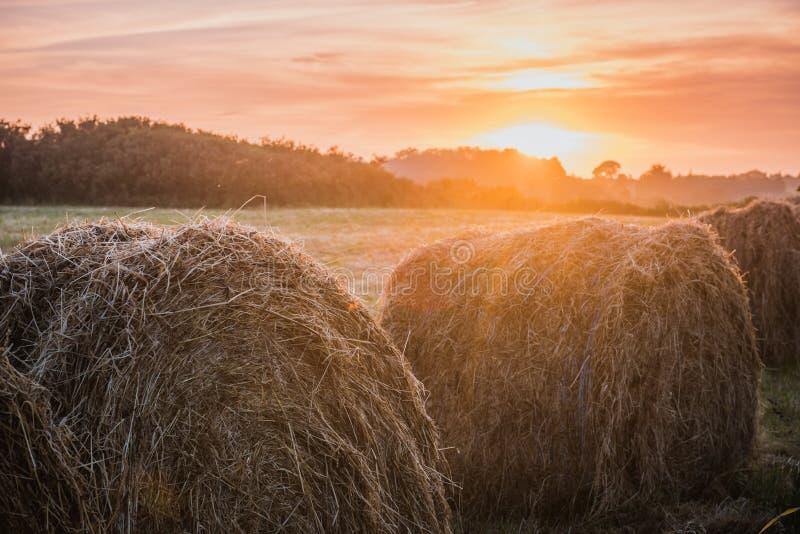 Mucchi di fieno di concetto del raccolto sul campo di tramonto fotografia stock