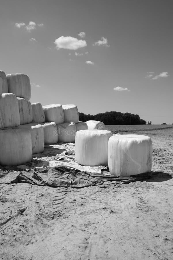 Mucchi di fieno nella campagna fotografie stock