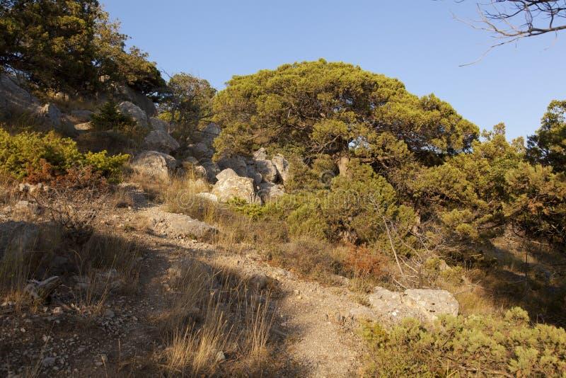 Mucchi di pietre nella foresta del ginepro fotografia stock libera da diritti