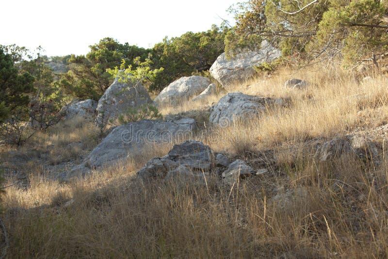 Mucchi di pietre nella foresta del ginepro fotografie stock libere da diritti