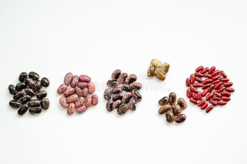 Mucchi di vari fagioli colorati su fondo bianco Assortimento dei fagioli rossi, di rosa, marroni e neri fotografia stock