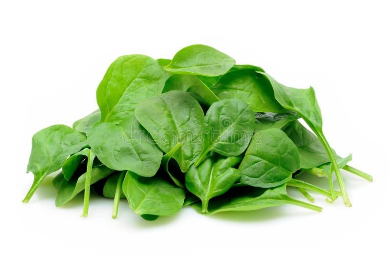 Mucchio degli spinaci del bambino immagine stock