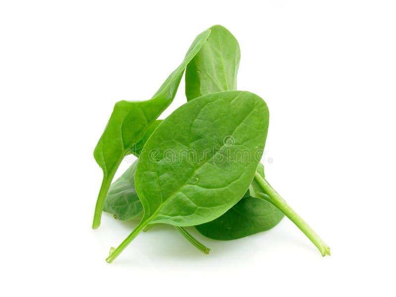 Mucchio degli spinaci del bambino fotografia stock