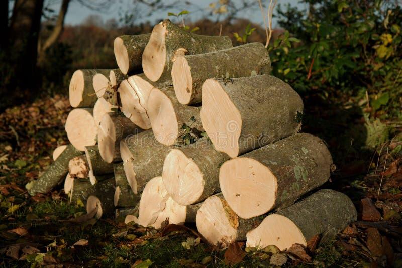 Mucchio dei ceppi freschi di legno del fuoco del taglio fotografie stock libere da diritti