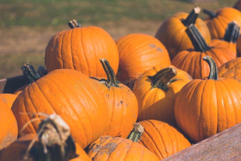 Mucchio dei pumpins arancio fotografia stock