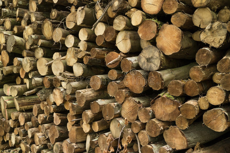Mucchio dei tronchi cutted nella foresta fotografia stock