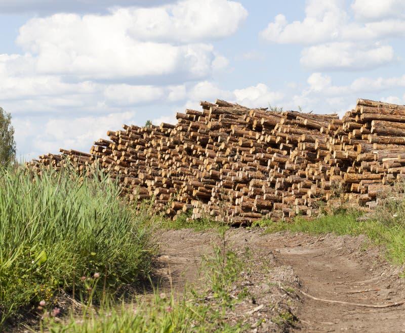 mucchio dei tronchi del pino immagini stock libere da diritti