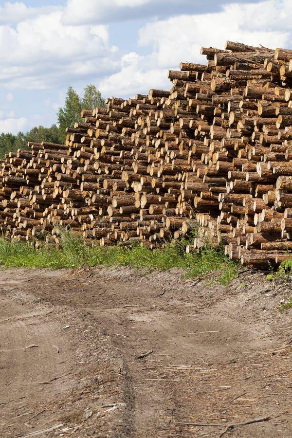 mucchio dei tronchi del pino fotografie stock