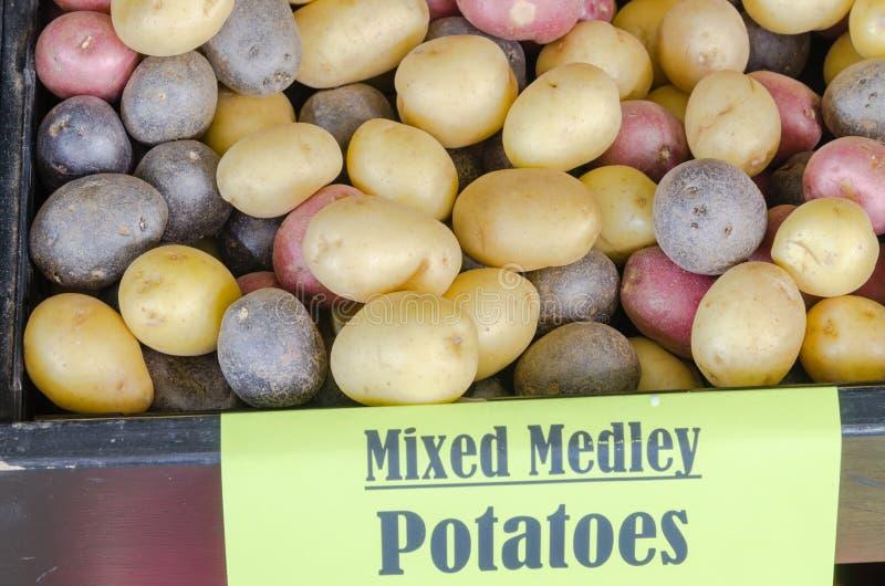 Mucchio del fondo misto organico delle patate dell'arcobaleno di miscuglio fotografie stock libere da diritti