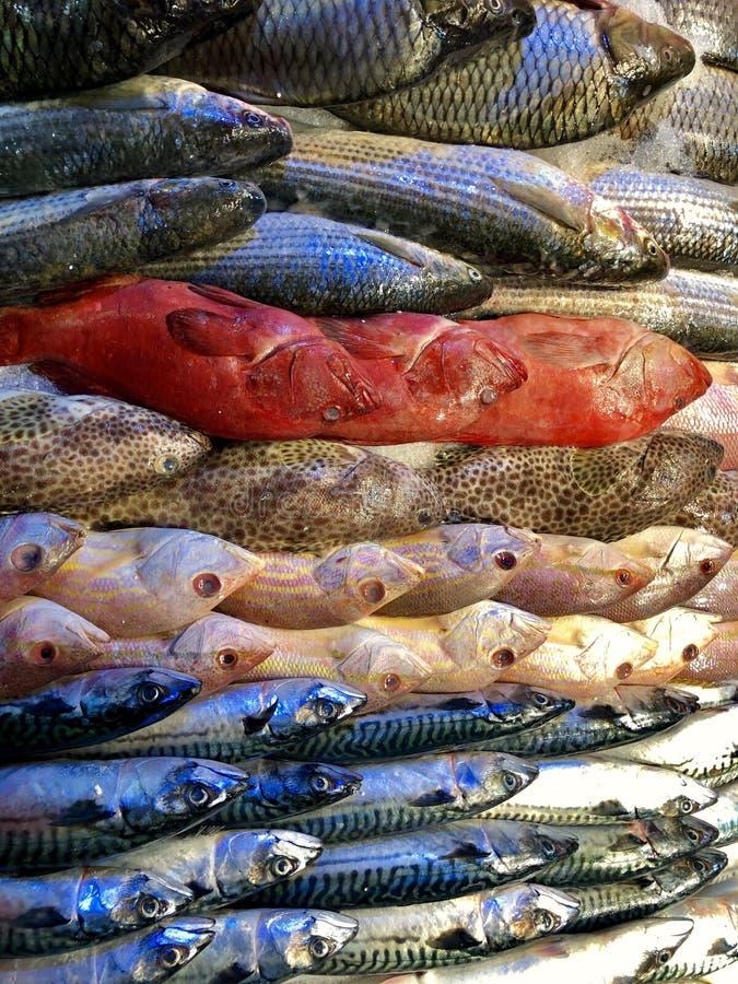 Mucchio del pesce fresco differente immagini stock libere da diritti