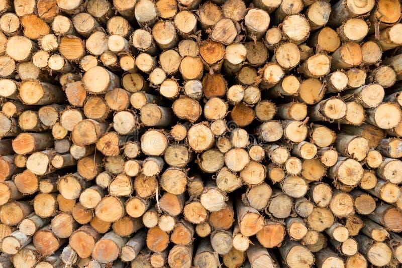 Mucchio del taglio dei tronchi di albero immagine stock
