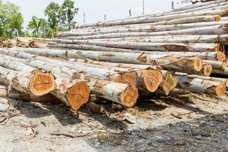 Mucchio del taglio dei tronchi di albero fotografia stock libera da diritti