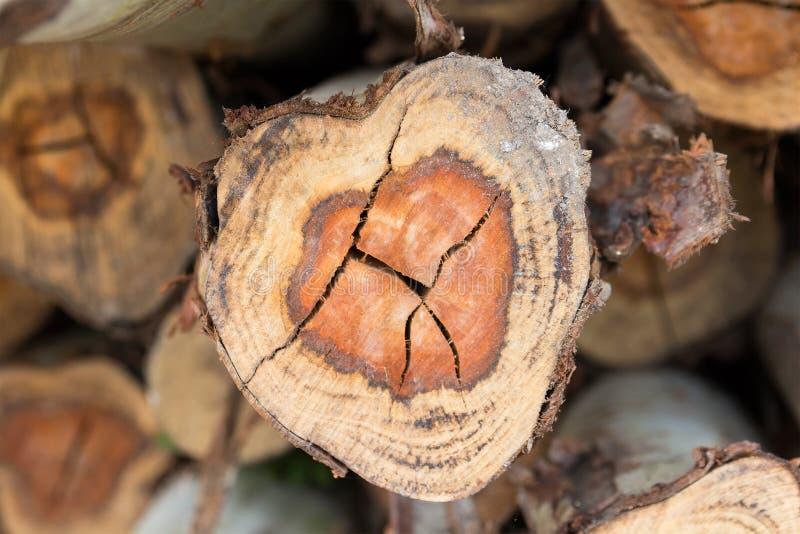 Mucchio del taglio dei tronchi di albero fotografia stock
