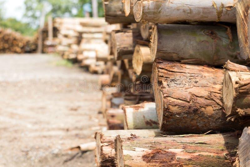Mucchio del taglio dei tronchi di albero fotografie stock libere da diritti