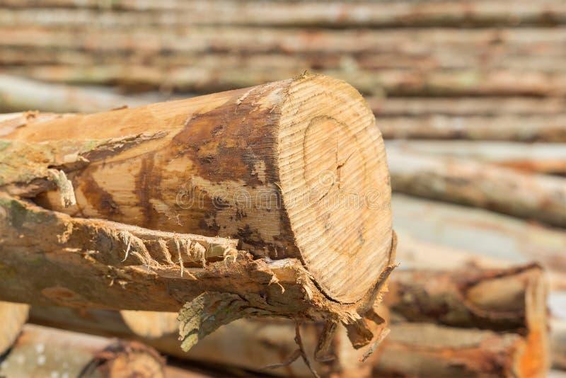 Mucchio del taglio dei tronchi di albero immagine stock libera da diritti