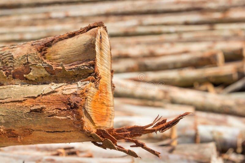 Mucchio del taglio dei tronchi di albero immagini stock