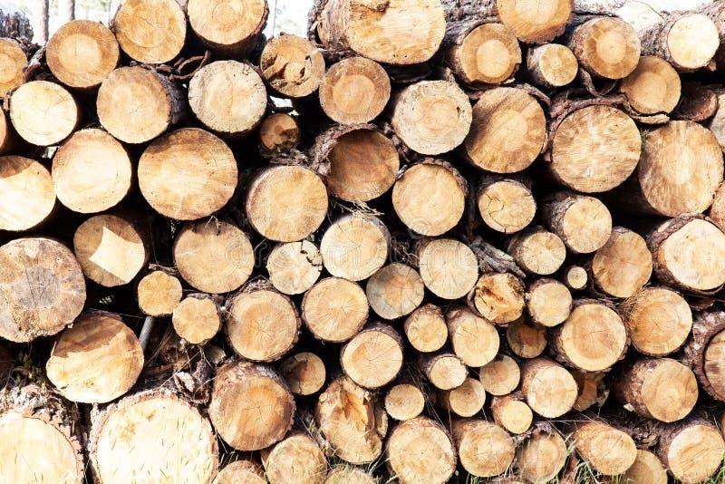 Mucchio del taglio dei tronchi di pino immagini stock
