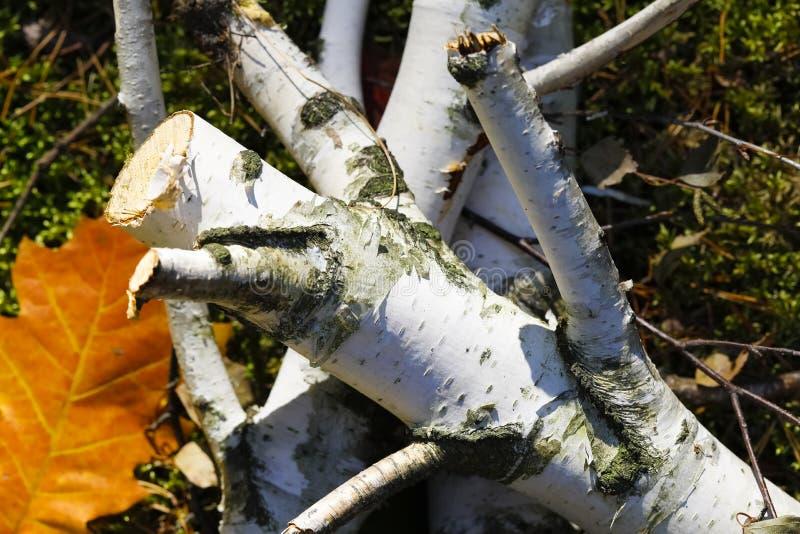 Mucchio della legna da ardere della betulla immagini stock