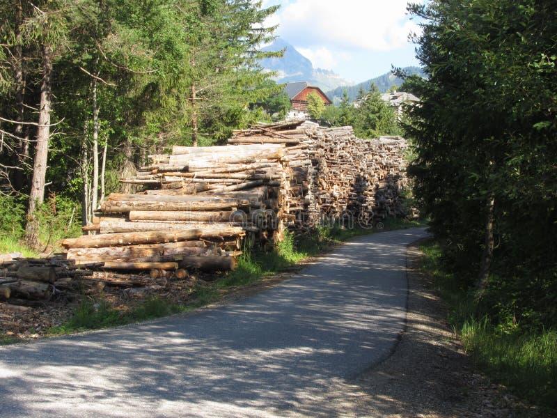 Mucchio della legna da ardere impilato nella foresta ad estate Il Tirolo del sud, Italia fotografia stock libera da diritti
