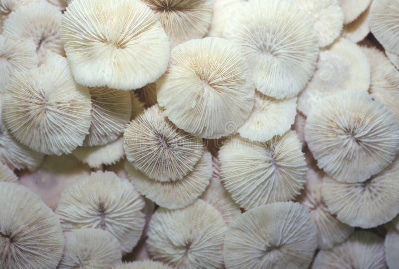 Mucchio delle conchiglie, Ft Myers, Florida fotografia stock
