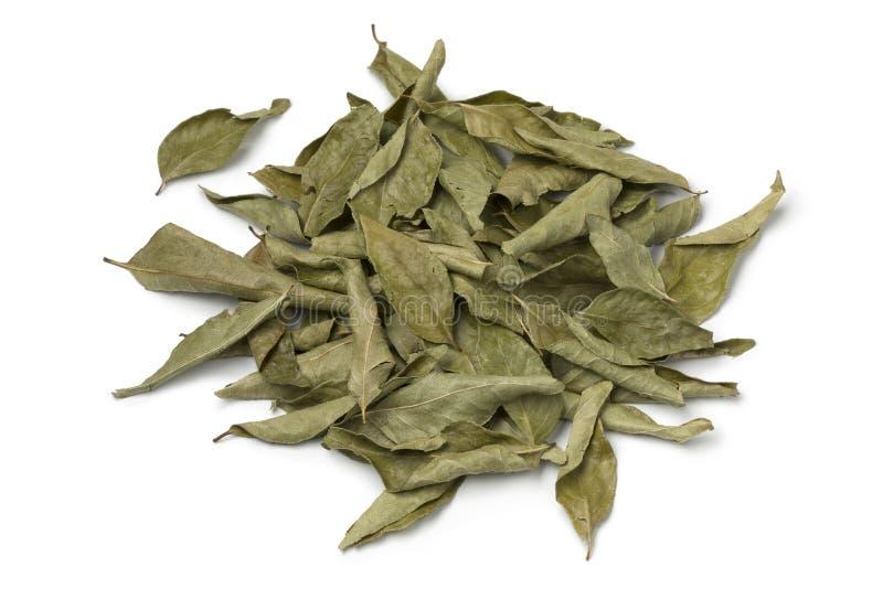 Mucchio delle foglie secche del curry fotografia stock