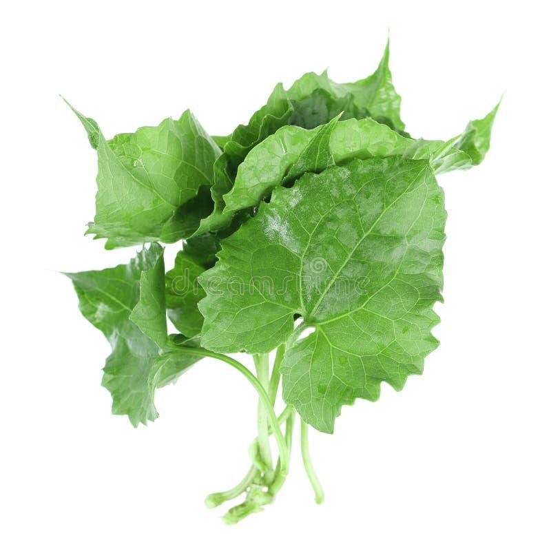 mucchio delle foglie verdi isolate su bianco immagini stock