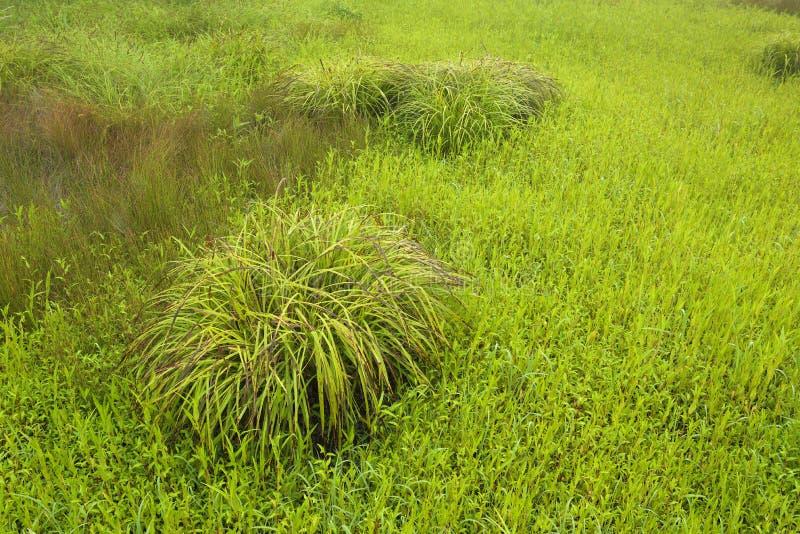 Mucchio di erba nel campo fotografia stock libera da diritti