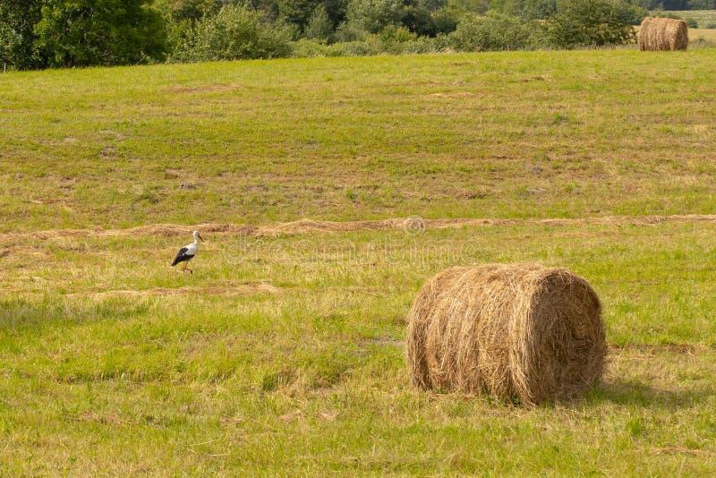 Mucchio di fieno al campo con l'uccello della cicogna in villaggio russo Kaliningrad immagini stock libere da diritti