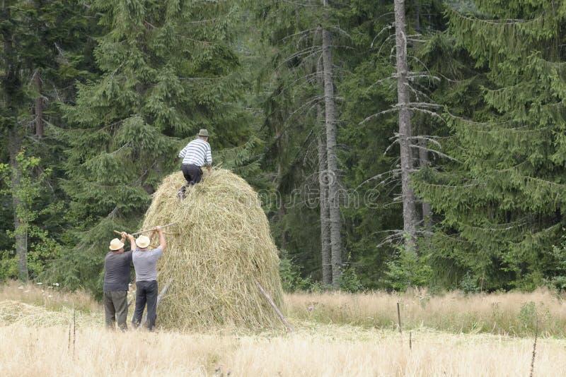 Mucchio di fieno costruito dagli agricoltori agricoli fotografie stock