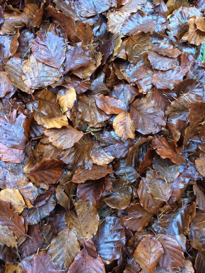 Mucchio Di foglie in autunno stock foto's