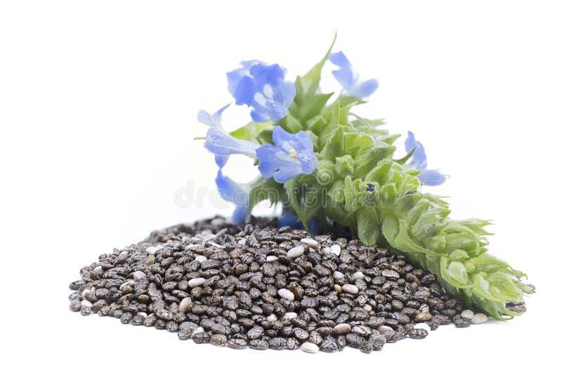 Mucchio di hispanica di Chia Salvia dei semi con i fiori sulla parte posteriore bianca immagini stock libere da diritti