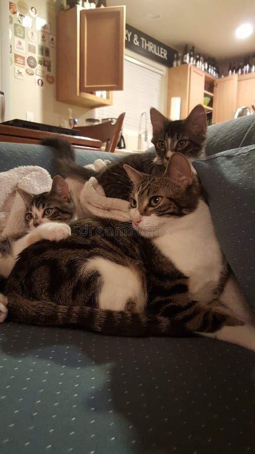 Mucchio di Kitty fotografia stock