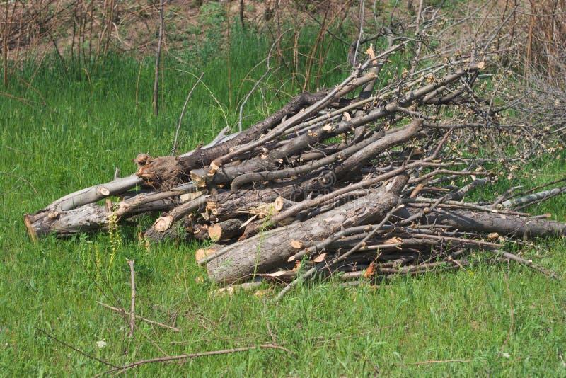 Mucchio di legna da ardere su erba fotografia stock