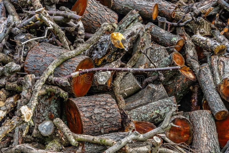 Mucchio di legno, del ramo di albero o del ceppo, fotografia stock