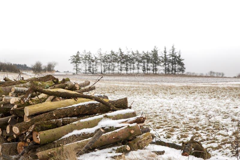 Mucchio di legno e del paesaggio aperto di inverno immagine stock