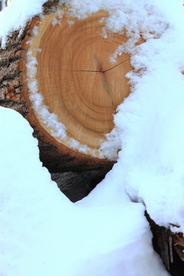 Mucchio di legno in neve fotografie stock