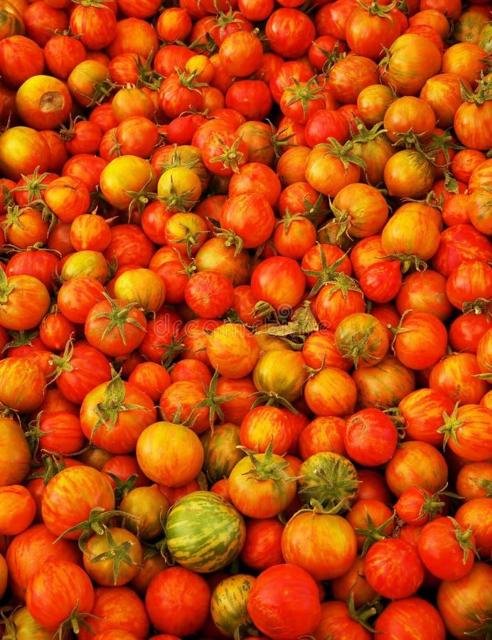 Pomodori succosi rossi di cimelio fotografie stock