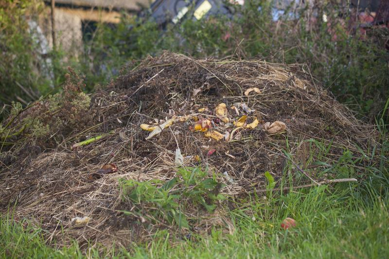 Mucchio di rifiuti alimentari fotografia stock