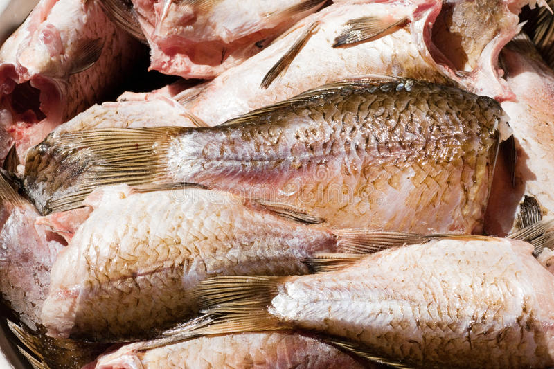 Download Much Fresh Fishes. Royalty Free Stock Image - Image: 15670836