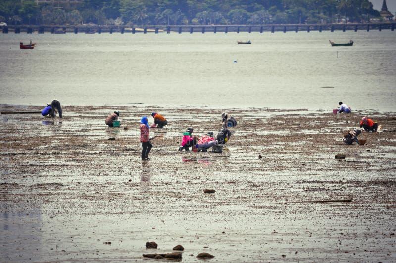 Mucha gente en la ropa cerrada que recoge en los crustáceos del mar manualmente en venta fotografía de archivo