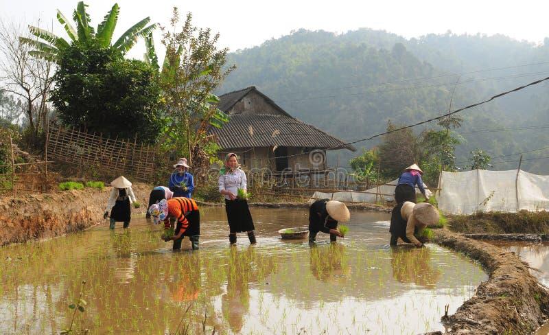Mucha gente que trabaja en el campo en el pueblo de Caivam en Vinhlong, Vietnam fotos de archivo