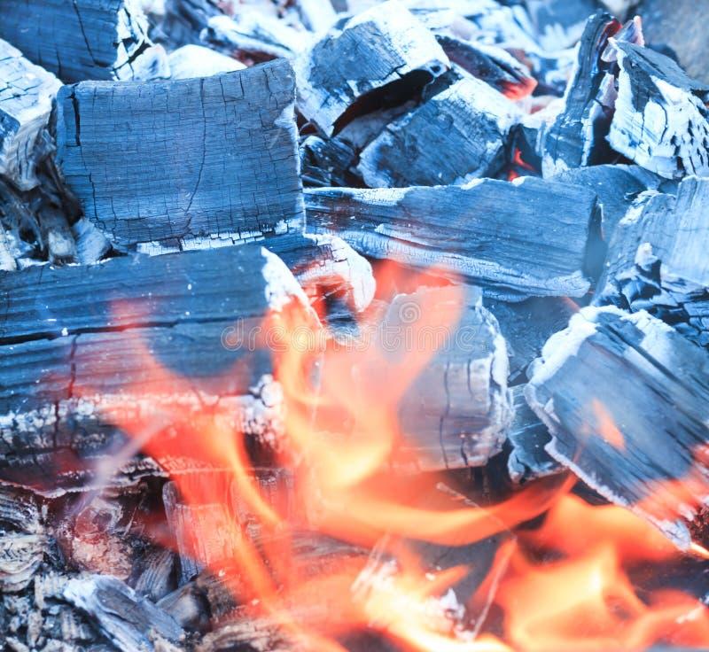 Mucha haber carbonizado, carbón de leña, ceniza El árbol apenas quemado abajo foto de archivo