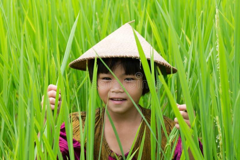 Muchacha asiática en arroz de arroz foto de archivo libre de regalías