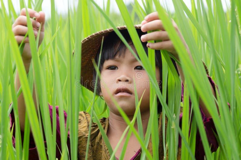 Muchacha asiática en arroz de arroz fotografía de archivo